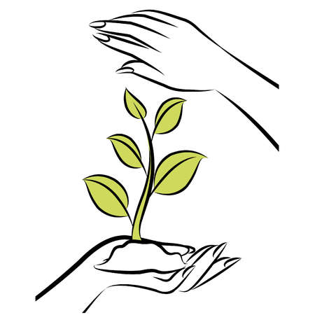 hands holding plant: Human hand with a green plant. Vector