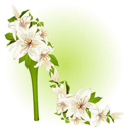 plant delicate: High heel from beautiful flowers. Vector