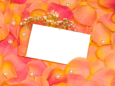rose petals with banner to write it on your text photo