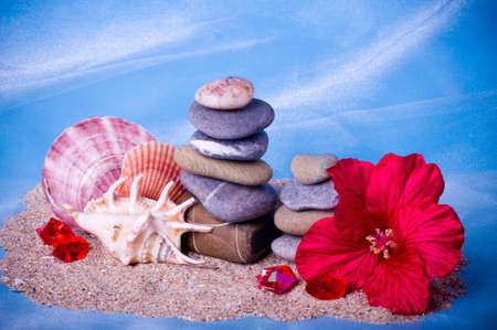 stones with flower: Beautiful exotic shell and stones, flower on a blue background Stock Photo