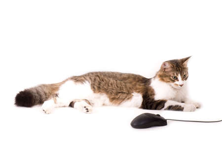 Beautiful cat with computer mouse on white background photo