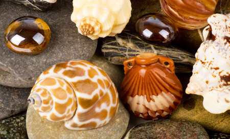 Beautiful exotic shell and stones Stock Photo - 12886116
