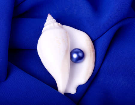 Beautiful exotic shell with pearl on blue background