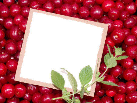 Red fresh cherry background with paper banner photo