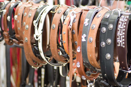 accessories for dogs are collars photo