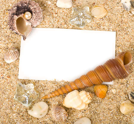 Beautiful sand background with exotic shell photo