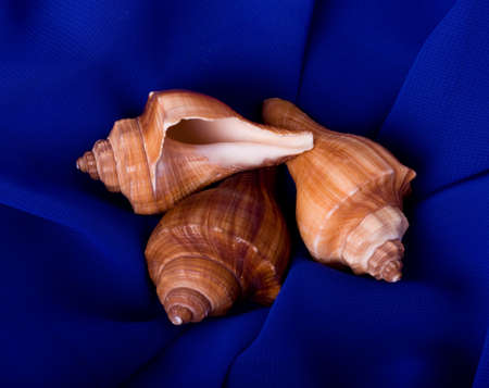 Beautiful exotic shell on blue background photo