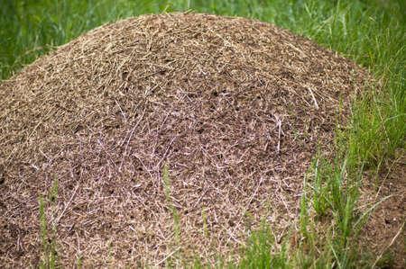 ameisenhaufen: Big Ameisenhaufen Lizenzfreie Bilder