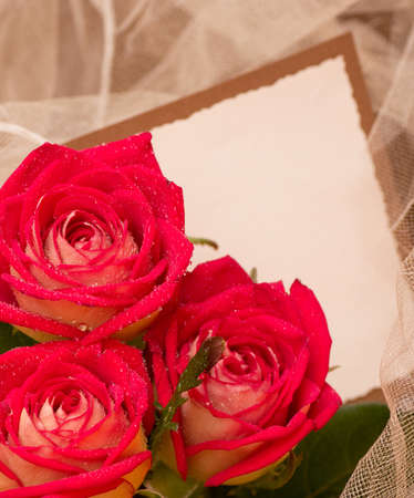 Beautiful roses with banner add photo