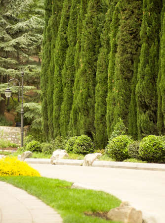 Pathway to garden with cypress trees photo