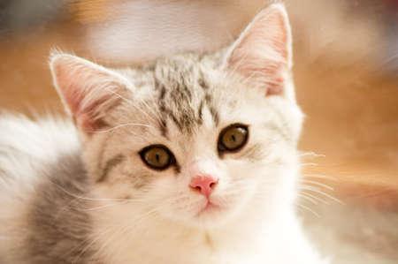 whiskar: Small funny kitten