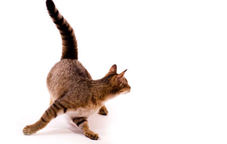 Beautiful  young cat Stock Photo - 17804341