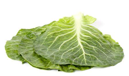 vibrat color: Lettuce
