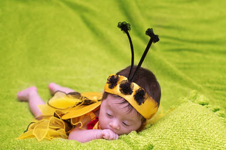 Honey Bee Baby on green background photo