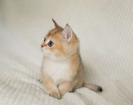 Beautiful young cat Stock Photo