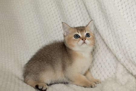Beautiful young cat Stock Photo