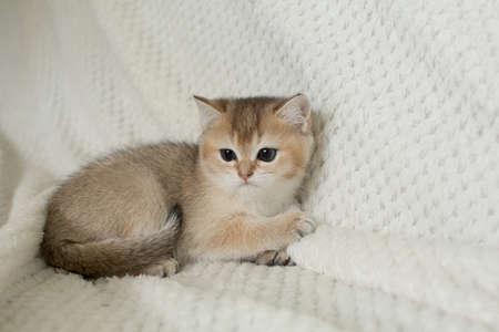 Beautiful young cat Stock Photo - 108397855