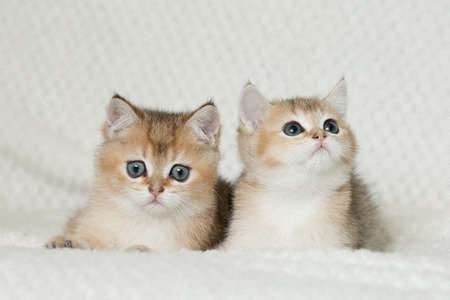 Beautiful young cats