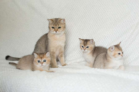 Beautiful young cats Stock Photo - 108439290