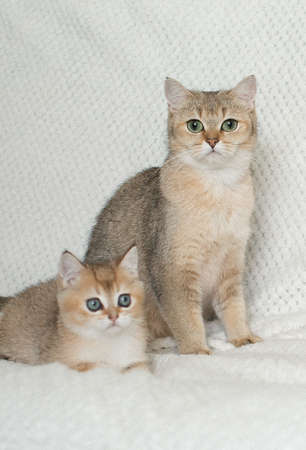 Beautiful young cats Stock Photo - 108439292