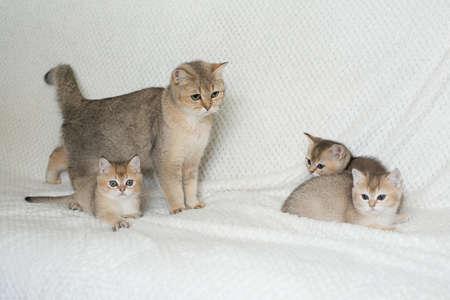 Beautiful young cats