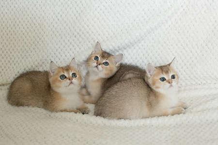 Beautiful young cats Standard-Bild - 108439553