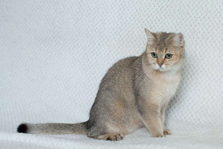Beautiful young cat Banque d'images - 108439561