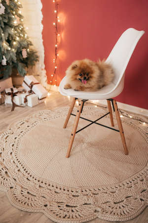 Fluffy puppy on a handmade carpet with New Year decorations