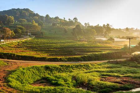 Morning day at Monjam Chiangmai