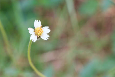 Flower of grass isolated on background Stock Photo