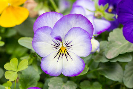 Purple flower isolated on background