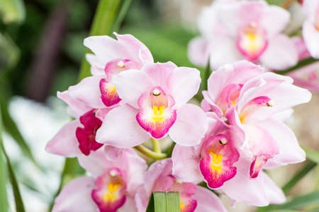Pink Orchid isolate on background