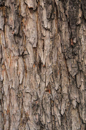 Old Wood Tree Texture Background Pattern