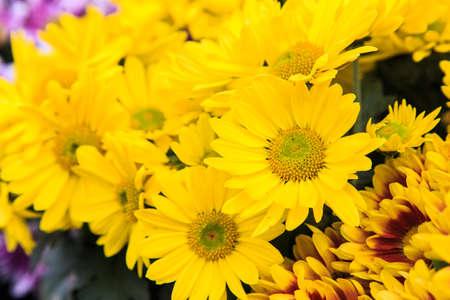 Yellow flower in the field