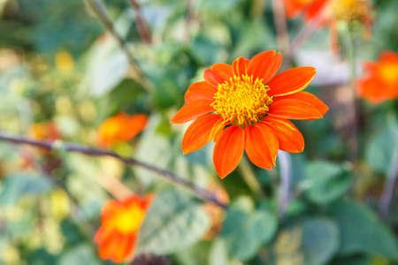 Orange Flowe isolate on background