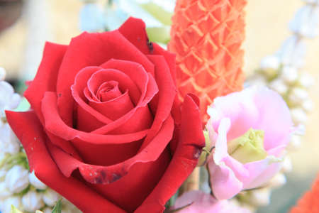 Red Rose Isolate on background