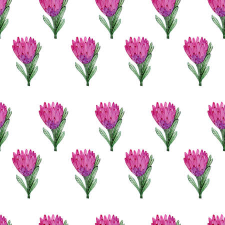 Seamless watercolor pattern with protea flowers. Blossom illustration for fabrics, textiles.