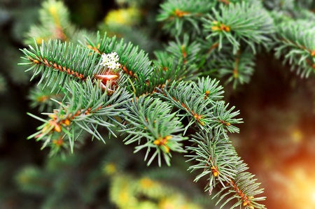 wedlock: gold wedding rings hang on a fir-tree branch Stock Photo