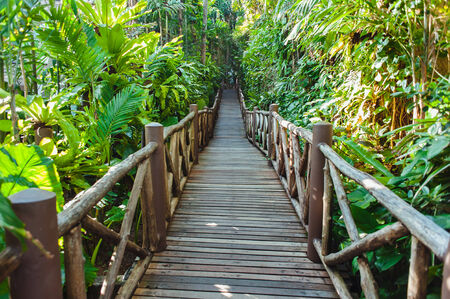 scenic background: Walking trail in tropical forest - Jungle forest scenic background