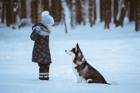 little girl with Husky dog on the snow, winter time photo