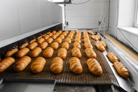 パン屋でコンベア ベルト上にオーブンから新鮮な熱いパン夜道します。