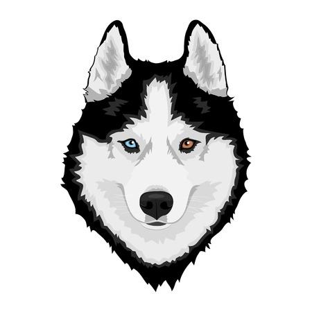 Husky siberiano blanco y negro con ojos multicolores. Retrato de perro dibujado a mano. Ilustración vectorial
