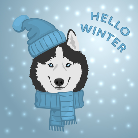 Dog portrait in blue hat and scarf. Black and white Siberian husky with blue eyes. The dog is a symbol of 2018. Winter greeting card. Vector illustration