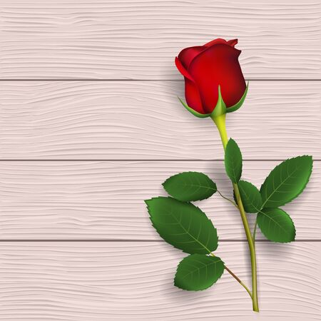 Single beautiful red rose on wooden background.