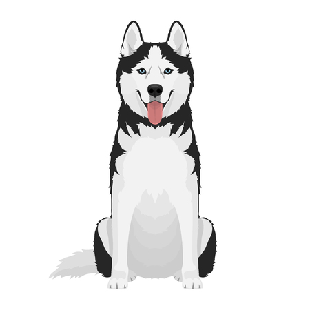 Black and white siberian husky with blue eyes and tongue out. Husky dog sitting isolated on white background.. Vector illustration
