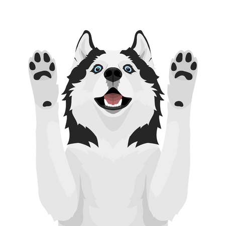 Black and white siberian husky with blue eyes. Husky dog pulls paws up isolated on white background. Vector illustration
