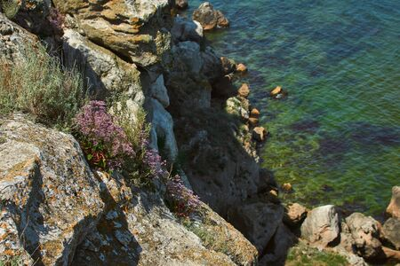 Dangerous rocky cliffs jagged to ocean. Peaked rocks and cliffs on the seashore. Flowers grow on a rock Stock Photo