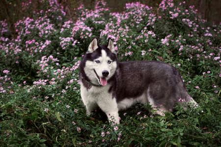 Close-up portrait of a dog on flowerbed 版權商用圖片