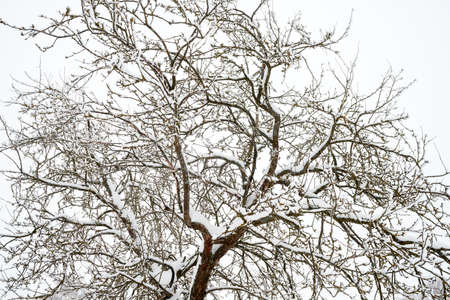 Snow covered tree. Winter pattern. Natural background