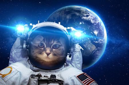 Gato hermoso en el espacio exterior. Foto de archivo